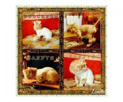 Стрижка сибирского кота и др. Зоосалон Балути
