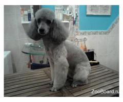 Тримминг, стрижка собак.