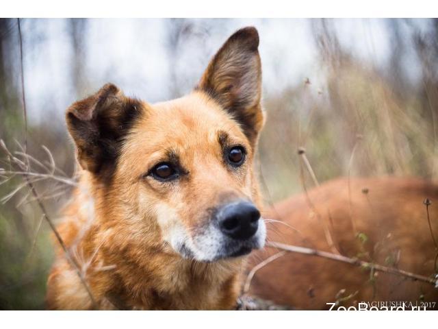 Ищет теплый дом, добрейшей души пёс по имени Спайк - 2/3