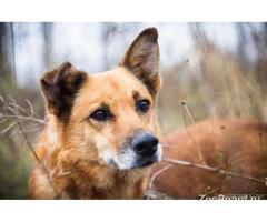 Ищет теплый дом, добрейшей души пёс по имени Спайк