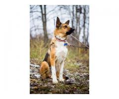 Невероятный пес Флоки ищет заботливого и любящего хозяина