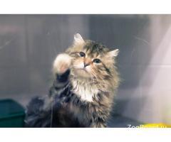 Игрушечный кот Барсик ищет дом!