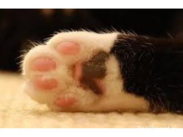 Стерилизация кошек. Кастрация котов. Удаление когтей у кошек - 2/3