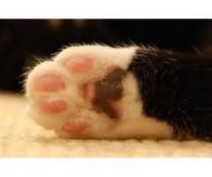 Стерилизация кошек. Кастрация котов. Удаление когтей у кошек