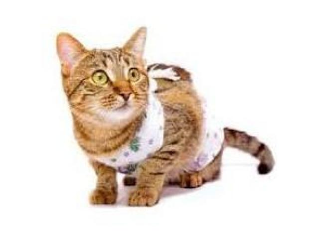 Стерилизация кошек. Кастрация котов. Удаление когтей у кошек - 3/3