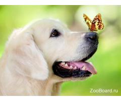 Дрессировка собак в Алтуфьево на все 100 %