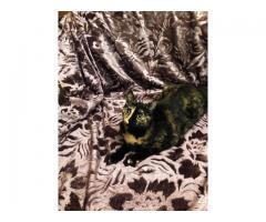 Кошка-черепашка на удачу