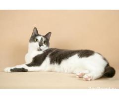 Кошка Кнопа в поиске дома